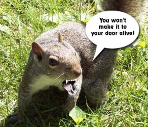 How squirrels feel about the Heathens.